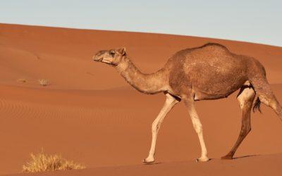 Is Camel Pose A Safe Backbend In Yoga?