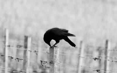 Bakasana – die Krähe: Überwinde deine Angst