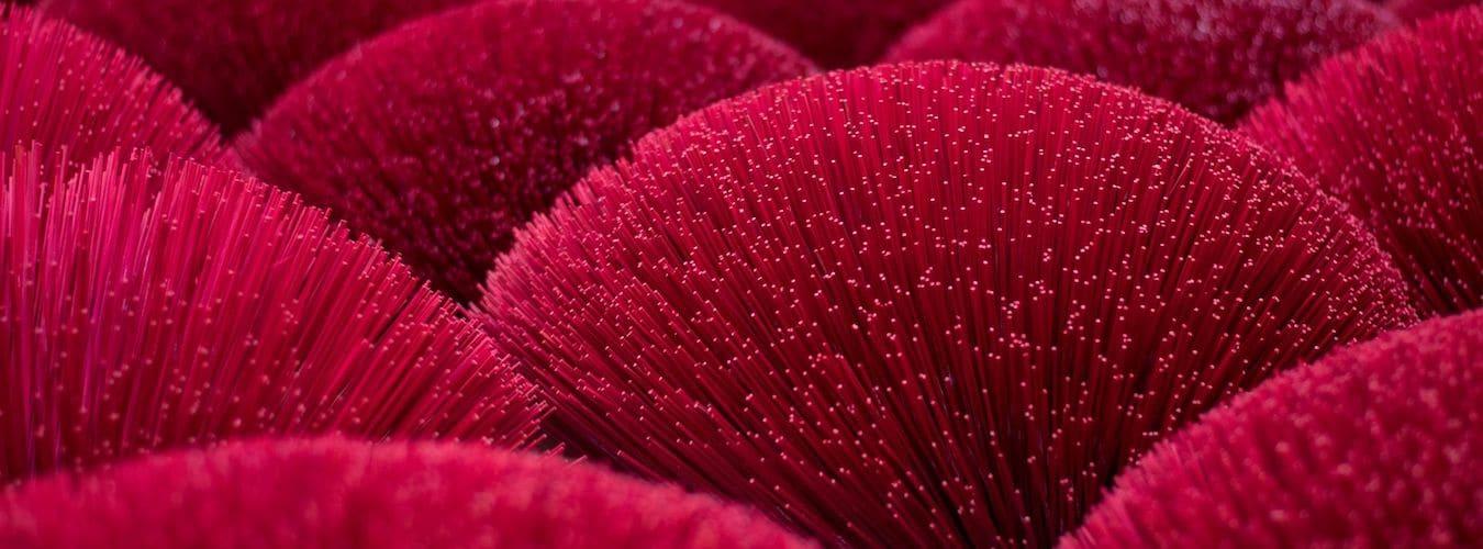 Rote buschige Blüten